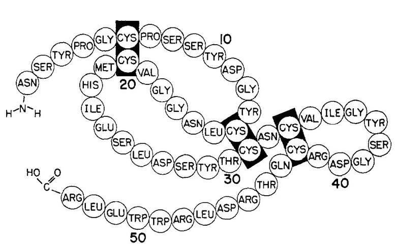 燕窝与表皮生长因子(EGF)